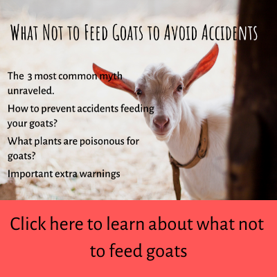 what not to feed goats