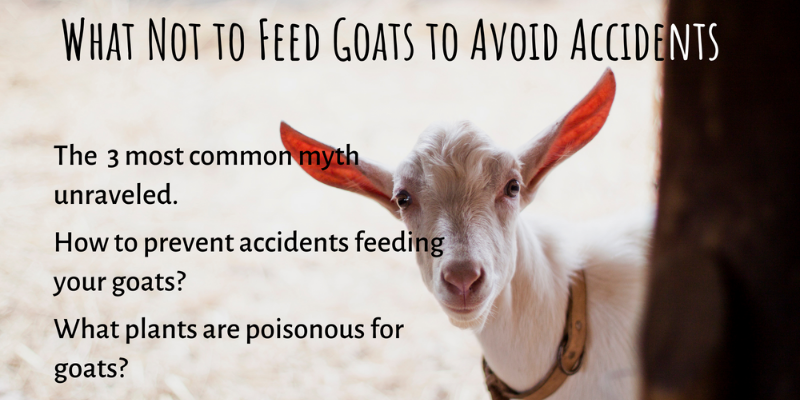 What not to feed your goats