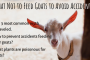 What Not to Feed Goats to Avoid Accidents