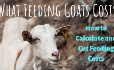 Feeding costs for goats, how to calculate and cut costs